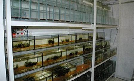 Стена, полная нерестовиков, - место рождения сотен тысяч аквариумных рыб