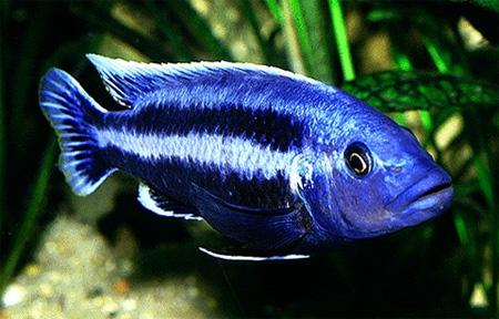 Все виды рыб фото