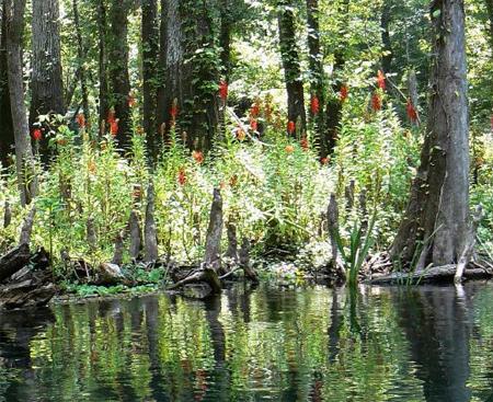 Аквариумные растения: фото с названиями и описанием. Какие растения лучше для аквариума? Растения для аквариума живые и искусственные. - Страница 3 129_2