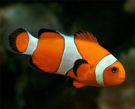 рыбки скачать через торрент - фото 7
