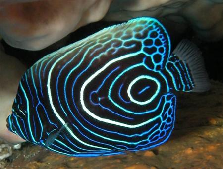Аквариумные рыбки уход тонкости содержания и размножения