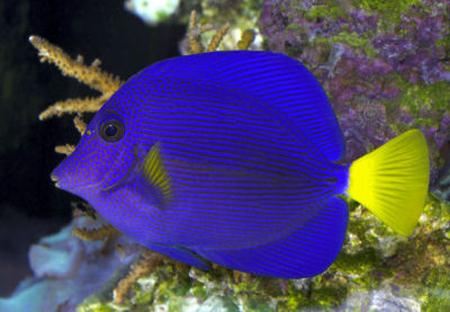 http://www.aquariumhome.ru/images/shop/2010/11/20/22/52/19099.jpg