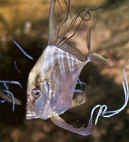 чем ловят рыбу из аквариума
