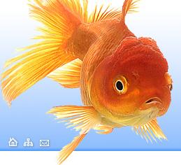 Болезни глаз у рыб петушок